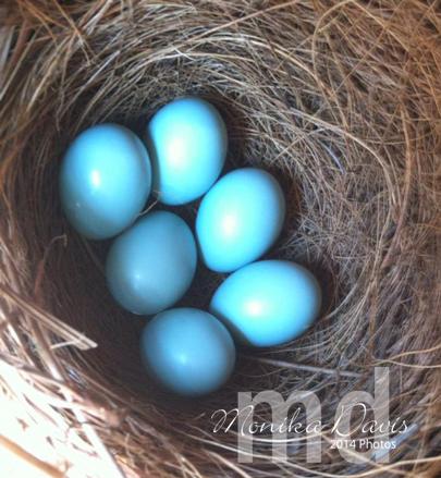 bb-eggs-5-8